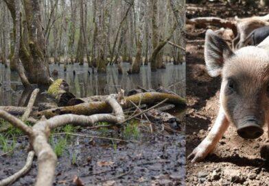"""""""La piscina della Verdesca e osservazione della fauna selvatica"""""""