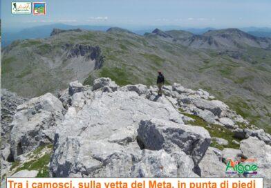 """""""Tra i camosci, sulla vetta del Meta, in punta di piedi"""" Prati Di Mezzo, Picinisco(FR)"""